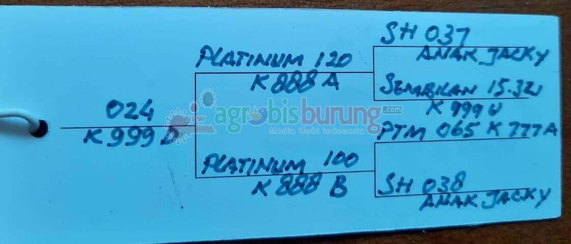 Materi Platinum 024 K.999D.